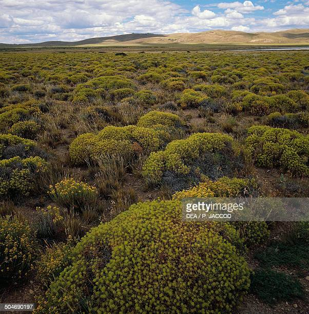 Semidesert steppe with plants of neneo Pampa de Agna Argentina