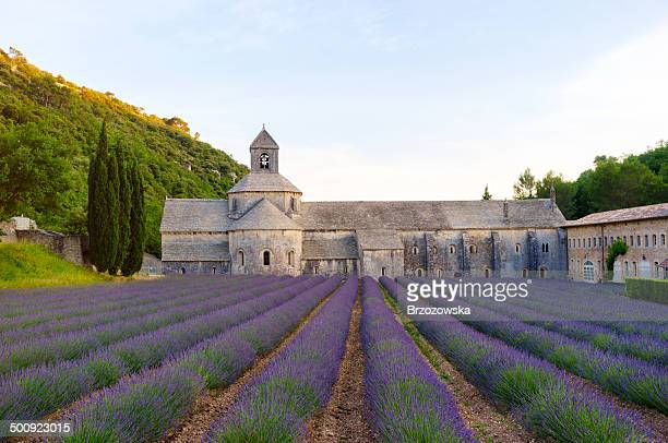 Senanque Abbey with blooming lavender field at dusk (Provence, France)
