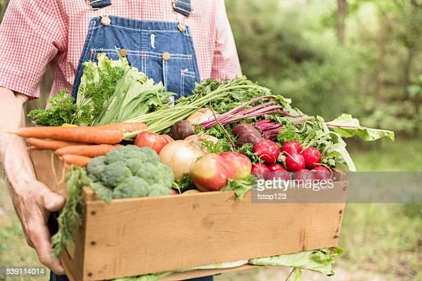Senior adulti, uomini contadino raccolto di verdure biologiche.