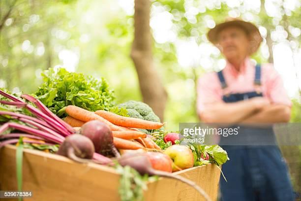Senior Erwachsener Mann landwirt Ernte Bio-Gemüse.