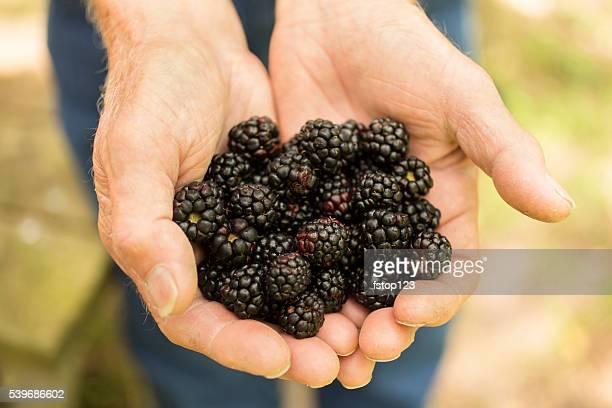 Senior adulte homme agriculteur sélection de mûres sur farm. fruits biologiques.
