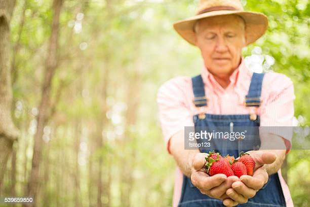 高齢者、雄農家直送のストロベリーをお勧めします。オーガニックフルーツをどうぞ。