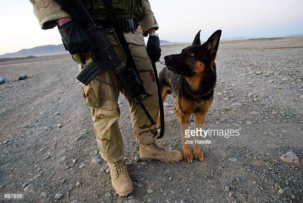 Senior Airman Chad Eagon of the US Air Force from Inka Illinois patrols the perimeter of the tarmac with his dog Apol February 4 2002 at the air base...