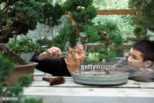 Senior Asian man trimming bonsai with childi
