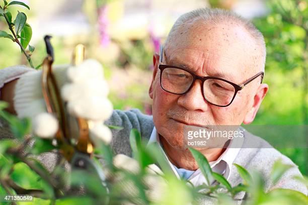 senior asian man working in the garden