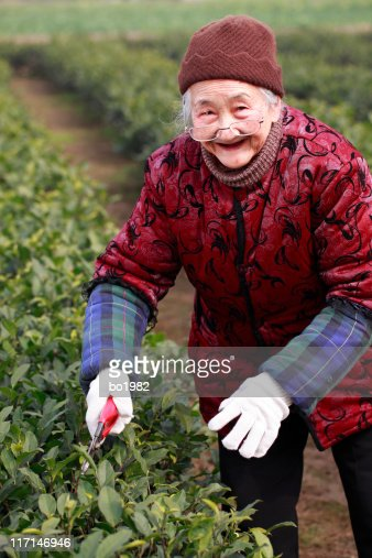 senior asian woman working in the garden : Stock Photo