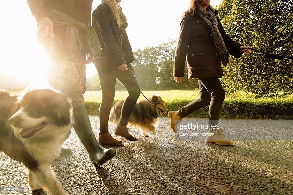 Senior couple and granddaughter walking dogs, Norfolk, UK