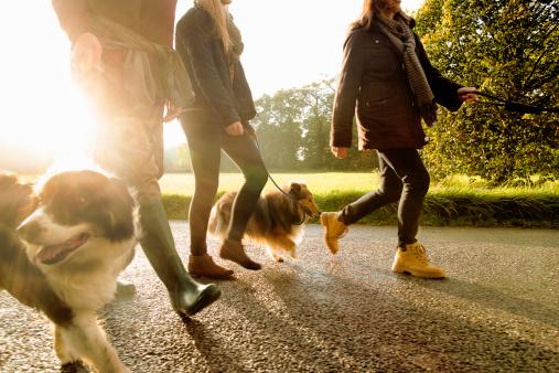 Картинки по запросу режима питания и прогулок у собак