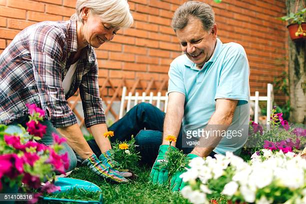 Senior Couple Gardening In Their Backyard Garden.