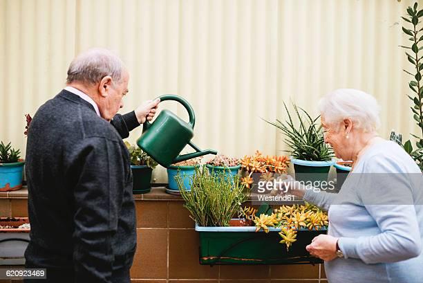 Senior couple gardening on balcony