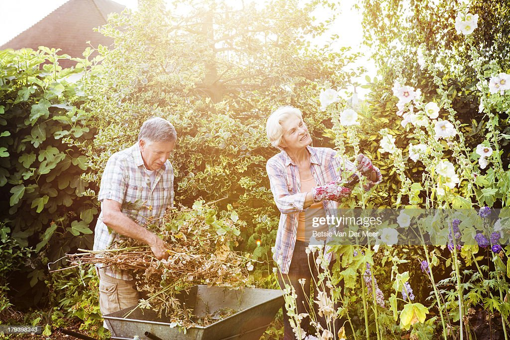 Senior couple gardening. : Stock Photo