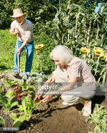 Senior couple gardening : Stock Photo