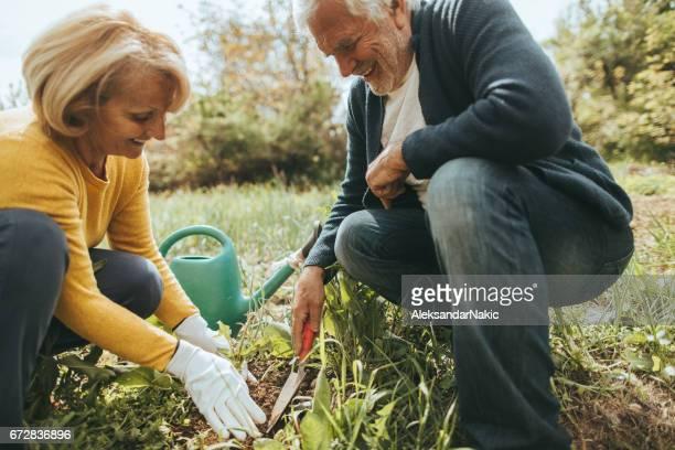 Altes Paar Gartenarbeit zusammen