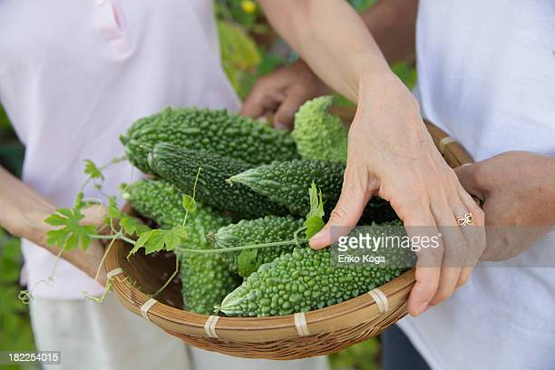 Senior Couple Holding Basket Full of Bitter melon