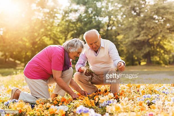 couple Senior travaillant dans le jardin.