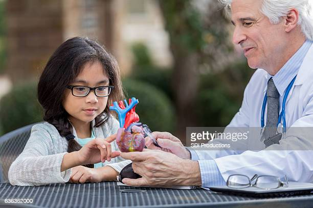 Senior doctor talks with little girl about human heart