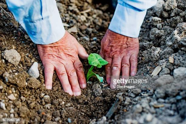 Senior Farmer Seeding in The Field