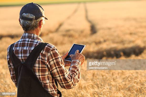 Senior farmer using digital tablet on wheat field