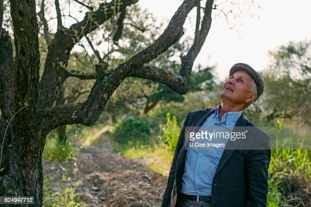Senior Farmer Walking in Their Olive Tree Field