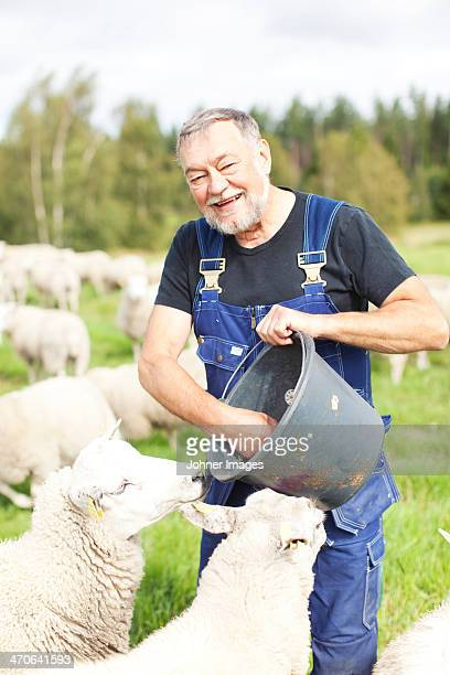 Senior farmer working on pasture, Smaland, Sweden