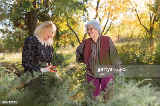 Senior female friends working together in garden