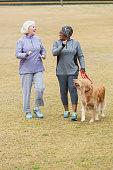 Senior women (60s) talking and walking golden retriever at the park.