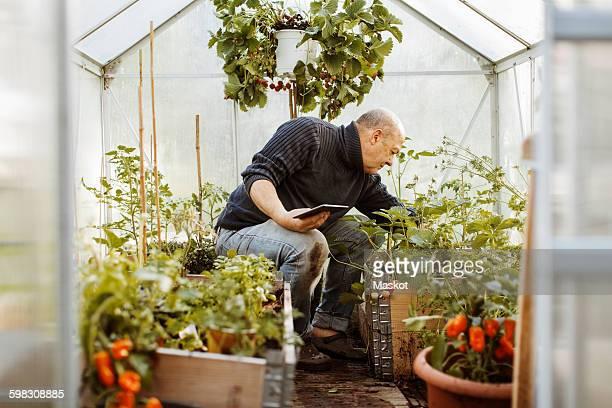 Senior gay man holding digital tablet while examining plants at nursery
