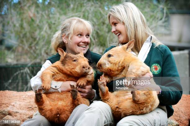 Senior Keeper Karen Davis holds 'Icy' and Education Officer Claire Peterson holds 'Polar' as they pose for a photo at Cleland Wildlife Park on May 1...