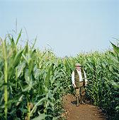 Senior male farmer walking beside sweetcorn crop