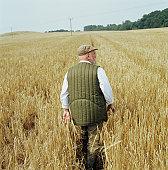 Senior male farmer walking through barley field, rear view
