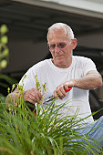 Senior man clipping seed pods of plant in his garden
