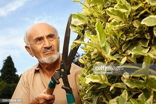 Senior man cutting hedge with garden shears, close-up