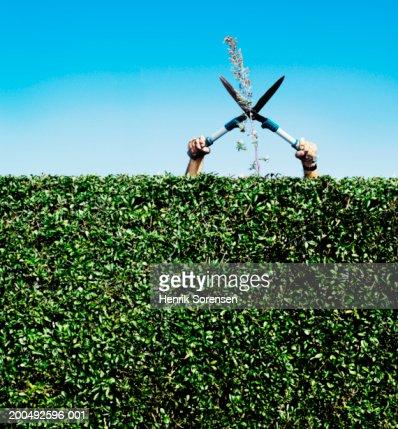 Senior man cutting twig on hedge