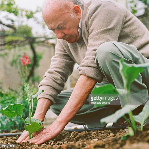 Senior man doing gardening work