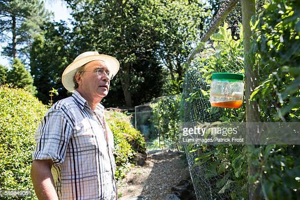 Senior man examining snail trap, Bournemouth, County Dorset, UK, Europe