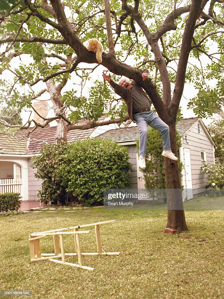 Senior man hanging from tree while trying to rescue cat