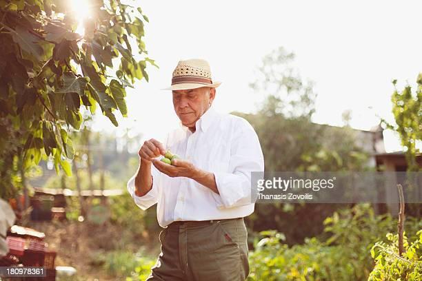 Senior man holding figs