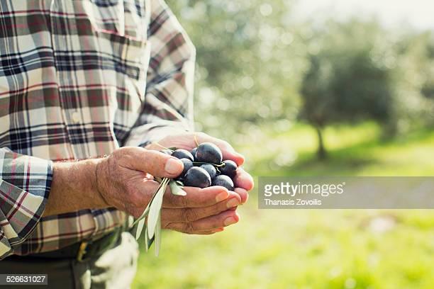 Senior man holds olives