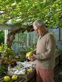 Senior man in greenhouse holding apple
