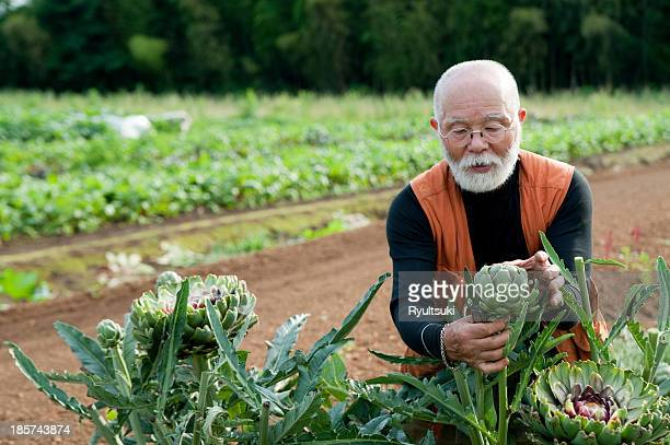Senior man looking at artichoke in field