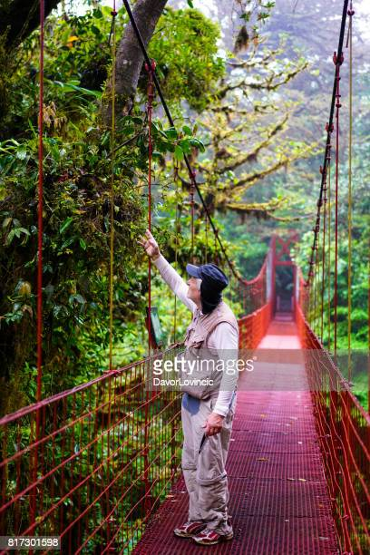 Senior man looking at tropical tree from suspension bridge in Monteverde Cloud forest , Costa Rica