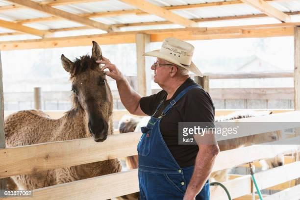 Senior man on farm or ranch taking care of horses