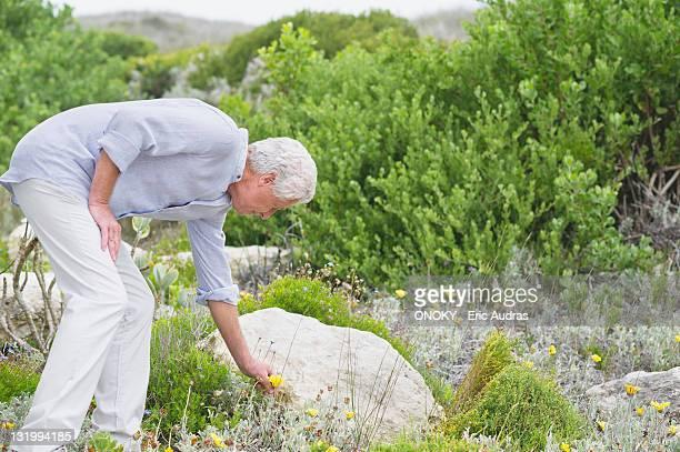 Senior man picking flower in a garden