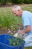 Senior man planting flowers in his garden