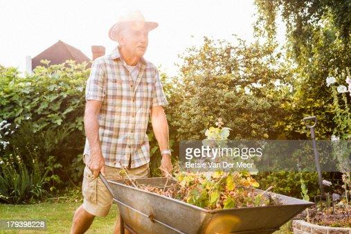 Senior man pushing wheelbarrow in garden.