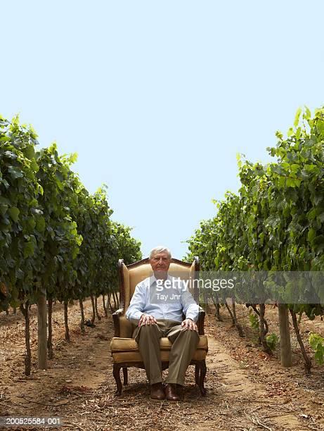 Senior man sitting in armchair in vineyard, portrait