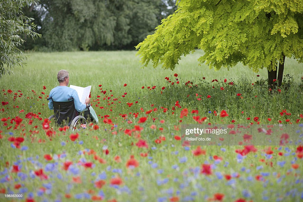 Senior man sitting in wheelchair on blooming meadow reading book : Stock Photo