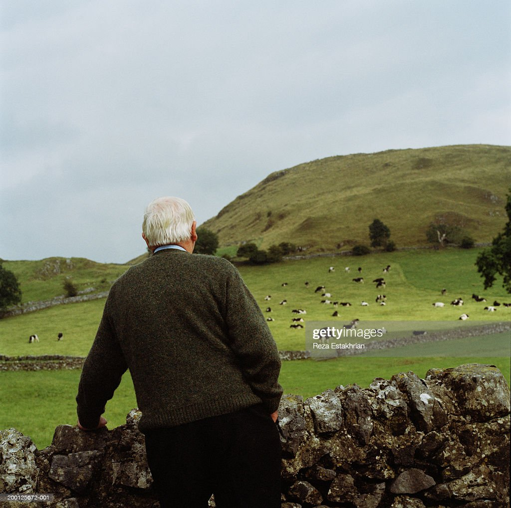 Senior man standing by stonewall, looking at cattle, rear view : Stock Photo