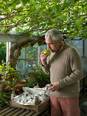 Senior man standing in greenhouse holding apple up to nose