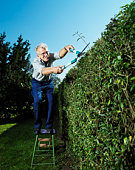 Senior man standing on stool, trimming hedge